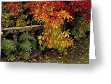 Balustrades & Autumn Colours Greeting Card