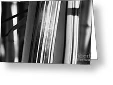 Bamboo Closeup Greeting Card
