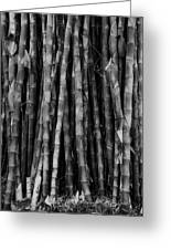 Bamboo II Greeting Card