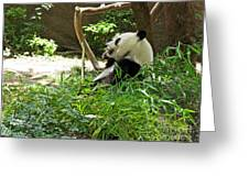 Bamboo Is Tasty Greeting Card