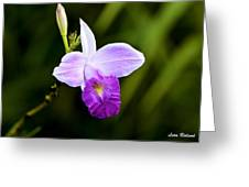 Bamboo Orchid Greeting Card