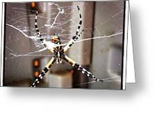 Banana Spider Greeting Card