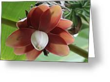 Banana Tree Blossom Greeting Card