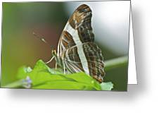 Band-celled Sister 2921 Greeting Card
