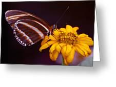 Banded Orange Heliconian Dryadula Phaetusa Greeting Card