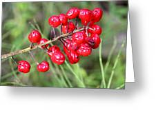 Baneberry Greeting Card
