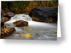 Banff - Autumn Creek Greeting Card