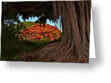 Banyan And Poinciana Trees Greeting Card