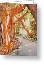 Banyan In The Afternoon Greeting Card