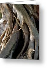 Banyan Greeting Card