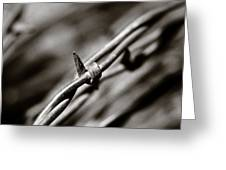 Barbbed Wire 1 Greeting Card