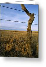 Barbed Wire Fence Along Dry Creek Road Greeting Card