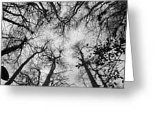 Bare Cypress Greeting Card
