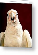 Bare Eyed Cockatoo Speaks Greeting Card