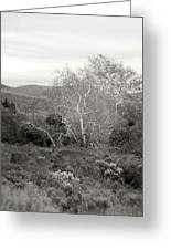 Bare Garden In The Hills Greeting Card