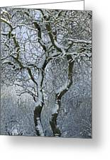 Bare, Snow-covered Tree In Winter Greeting Card