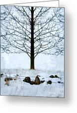 Bare Tree In Winter Greeting Card