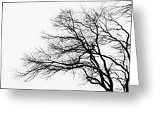 Bare Tree Silhouette Greeting Card