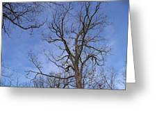 Bare Trees With Blue Sky Greeting Card