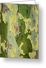 Bark Of A Sycamore Tree Greeting Card