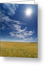 Barley Field Near Airdrie, Alberta Greeting Card
