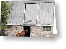 Barn And Horse Greeting Card