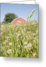 Barn On A Grass Slope Greeting Card by Shannon Fagan