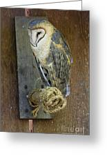 Barn Owl At Roost Greeting Card