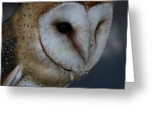 Barn Owl Closeup Greeting Card