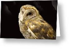 Barn Owl In A Dark Tree Greeting Card