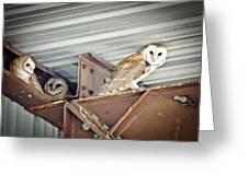 Barn Owls 1 Greeting Card