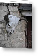Barn Skull Greeting Card