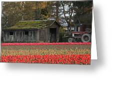 Barn Surrounded By Tulips Greeting Card