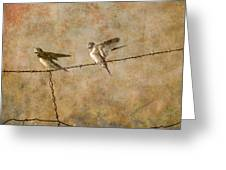 Barn Swallows On Barbed Wire Fence Greeting Card
