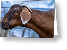 Barnyard Goat Greeting Card