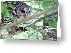 Barred Owl With Crawfish Greeting Card