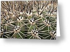 Barrel Cactus Color Greeting Card