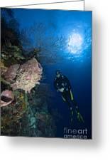 Barrel Sponge And Diver, Belize Greeting Card