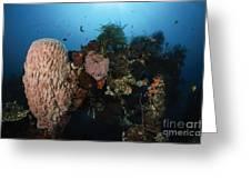 Barrel Sponge On Liberty Wreck, Bali Greeting Card