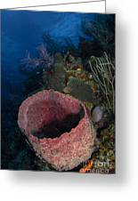 Barrel Sponge Seascape, Belize Greeting Card
