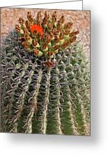 Barrell Cactus II Greeting Card