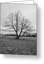 Barren Tree On A Winters Day Greeting Card