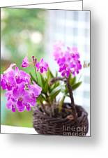 Basket Of Orchids Greeting Card