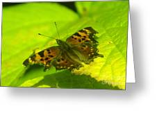 Basking Butterfly  Greeting Card