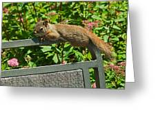 Basking Squirrel Greeting Card