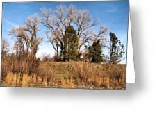 Bass Pond Trees 2012 Greeting Card