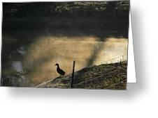 Bathing In Morning Light Greeting Card