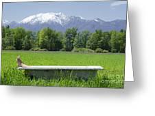Bathtub On A Green Field Greeting Card
