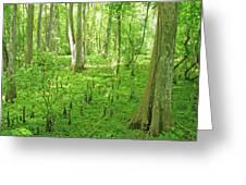 Baton Rouge Blueonnet Swamp  La Greeting Card