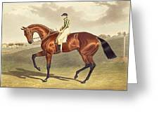 Bay Middleton Winner Of The Derby In 1836 Greeting Card